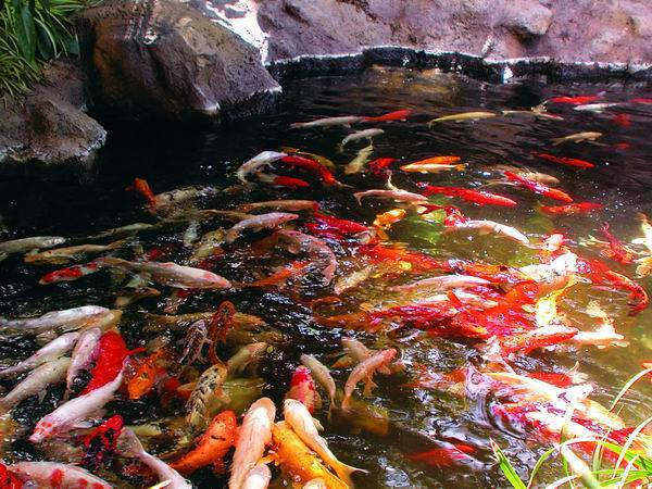 Naturagart teichforum schwimmteich gartenteich selber bauen for Fische im schwimmteich