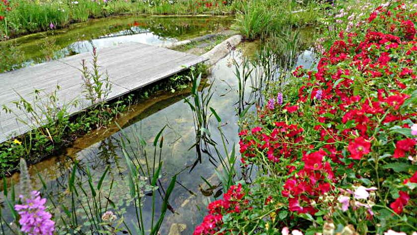 Schwimmteich mit Steg und Uferpflanzen und Wasserpflanzen