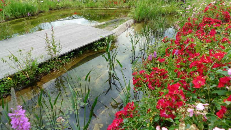 Teichpflanzen f r schwimmteiche schwimmteiche - Kindersicherung gartenteich ...