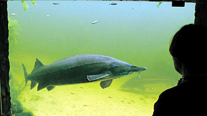 Fische ganz nah erleben