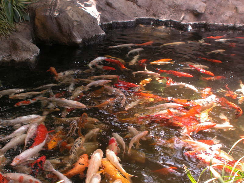 Fischteich basis wissen fischteiche for Goldfische teich sauerstoff