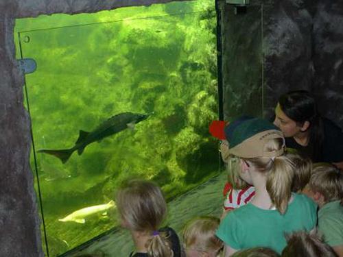 Teichfenster: So sehen Sie mehr von Ihren Fischen