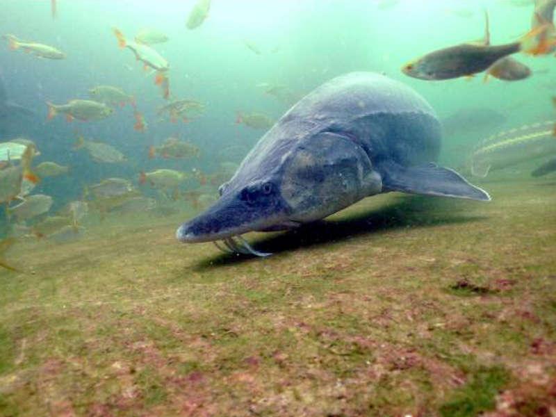 Fisch im Teich Dating