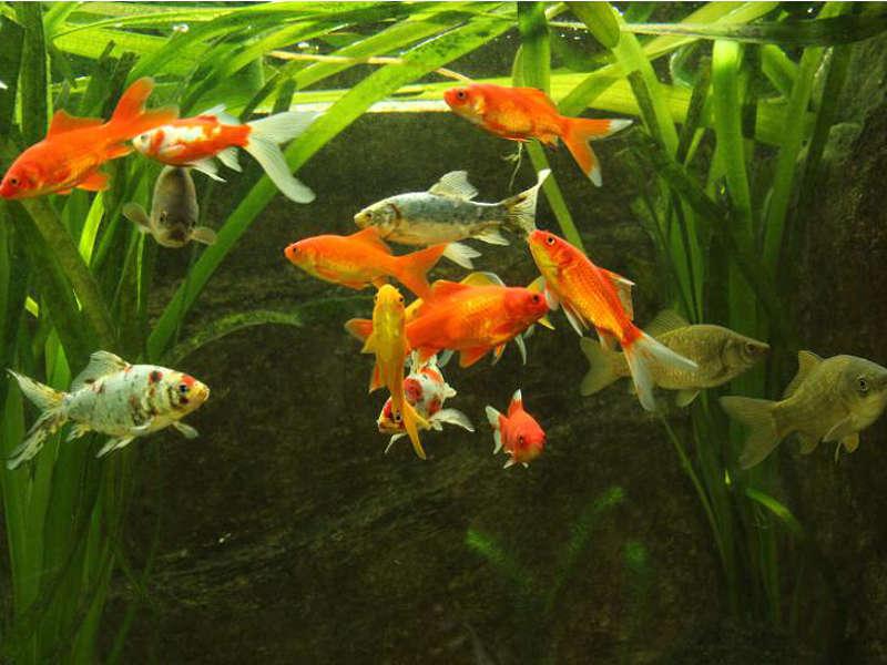 Teichgr en f r fische fischteiche for Fische im teich winter