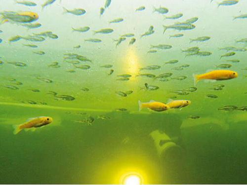In Kleinfisch-Teichen ist die Belastung nicht so groß