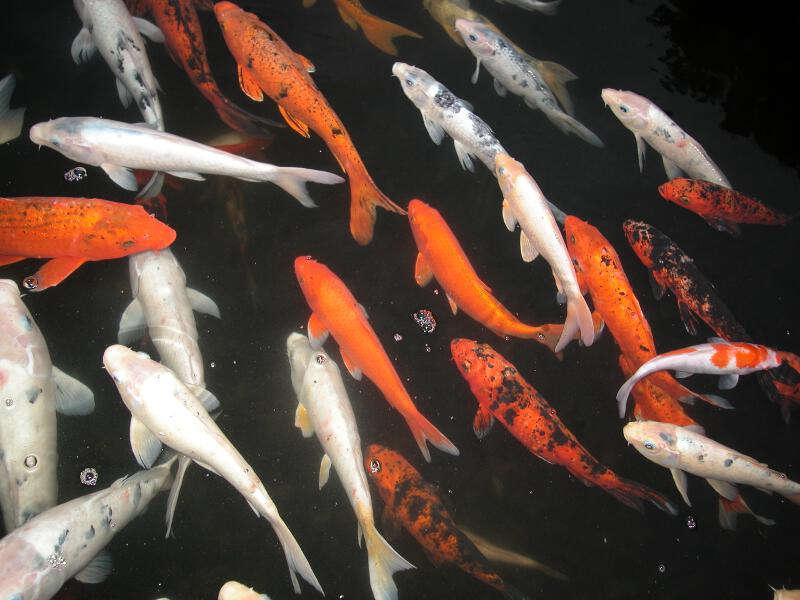 Teichgrößen für fische fischteiche