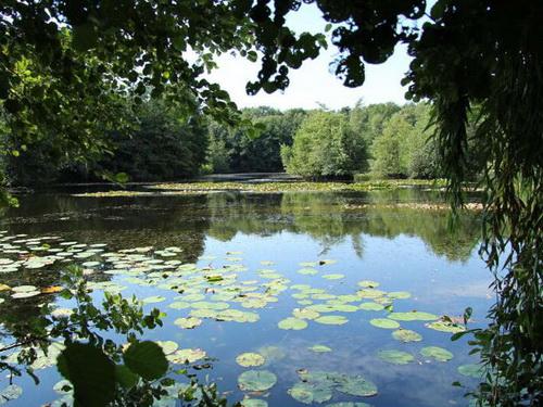 NaturaGart hat Kompetenz für naturnahe Teiche