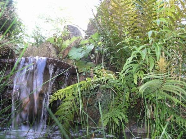 Landschaft aus naturteichen und pflanzen im und am teich for Naturteich pflanzen