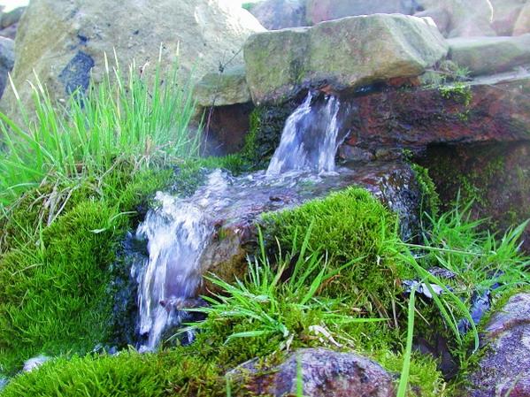 Quelle Bach Bachlauf Im Naturagart Park Landschaft