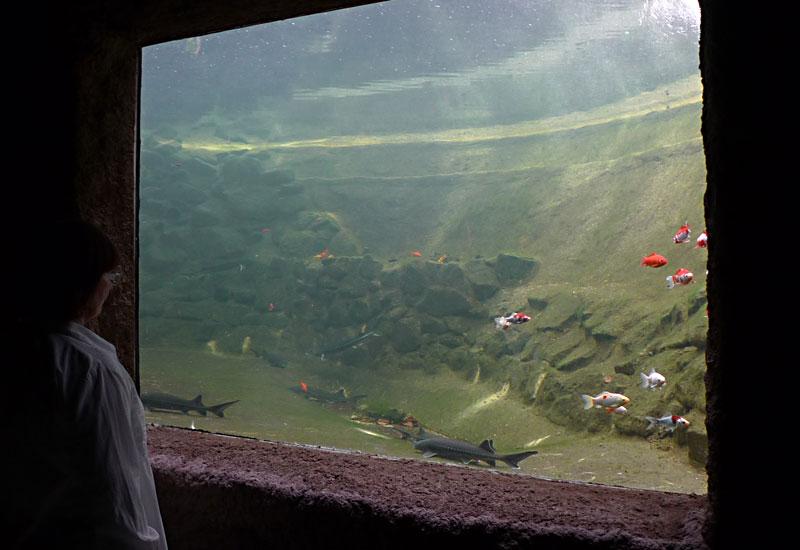 Das teich aquarium kaltwasser aquarium for Aquarium teich