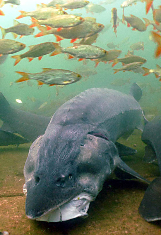 Die fische kaltwasser aquarium for Fische arten