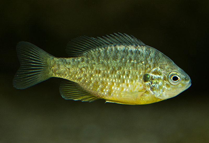Die fische kaltwasser aquarium for Teichfische arten
