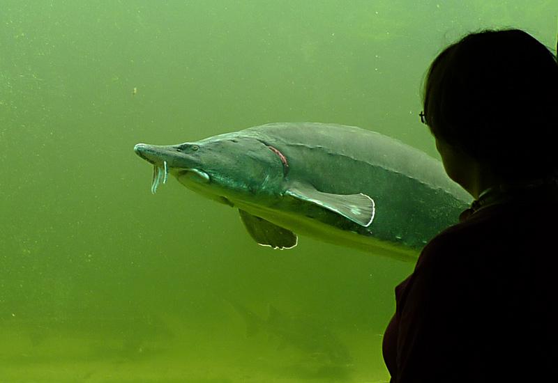 F hrungen kaltwasser aquarium for Aquarium fische im teich