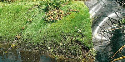 Uferbau teiche - Gartenteich gestalten bilder ...