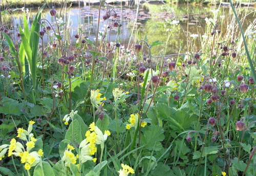 Beispiel: Blumen-Teichufer