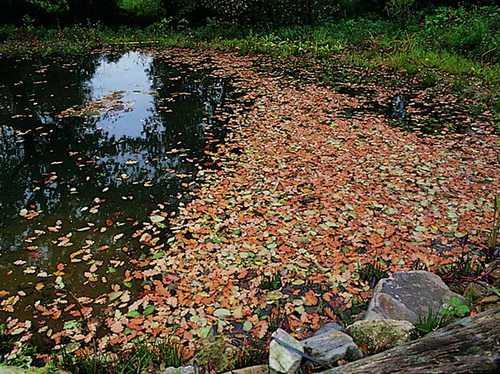 Herbstlaub wird zu Algen
