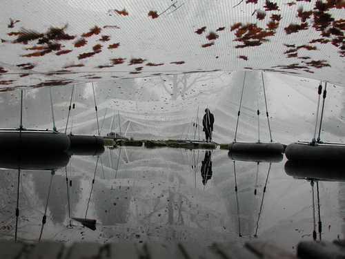 Der Teich braucht Licht