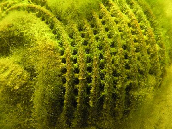 Pumpenschacht f r teichpumpen teich wassertechnik for Algen im fischteich