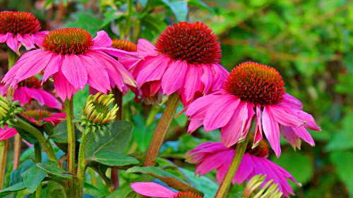 Pflanzen Haus Garten
