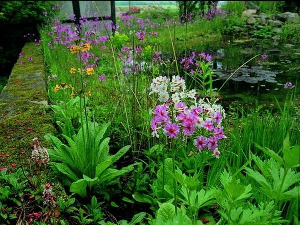 teichpflanzen bedarf wunsch und wirklichkeit teichpflanzen. Black Bedroom Furniture Sets. Home Design Ideas