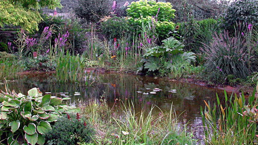 Teichumfeld Pflanzen Teichpflanzen