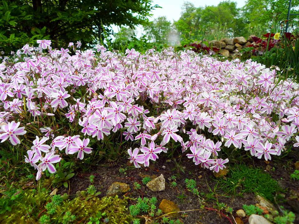 Lieblings Teichumfeld-Pflanzen | Teichpflanzen #NE_58