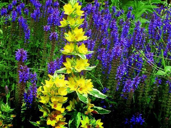 Teichumfeld-Pflanzen | Teichpflanzen