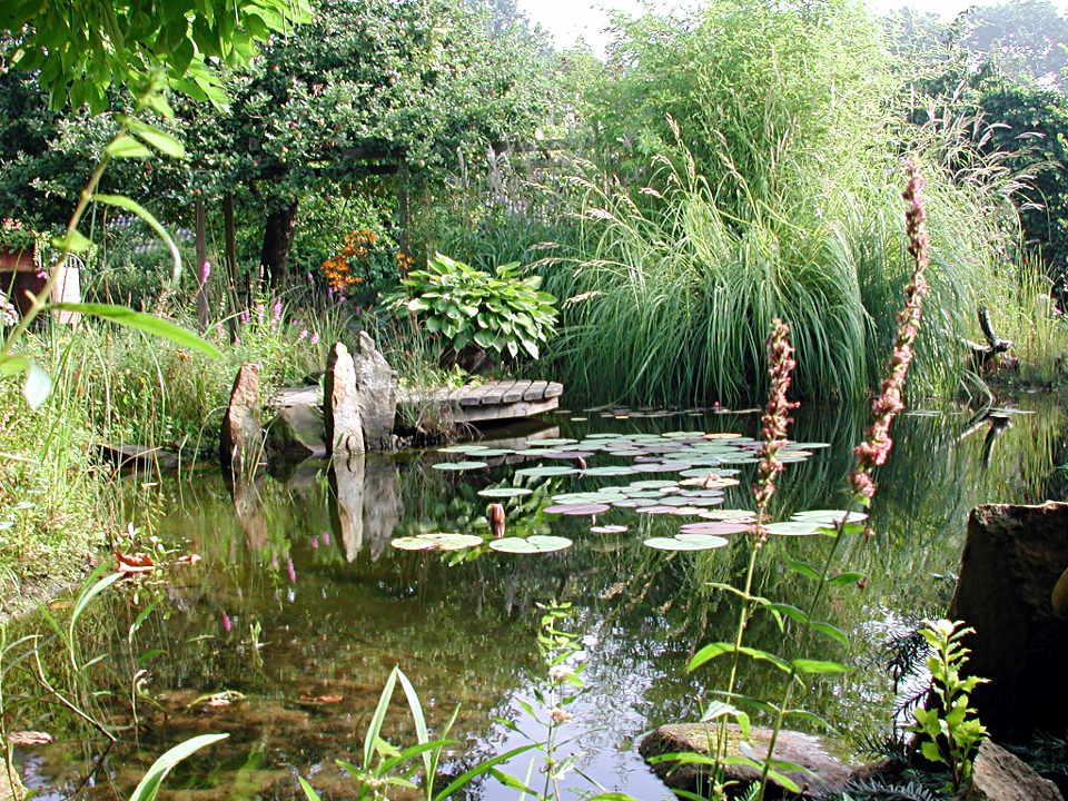 Fabelhaft Teichumfeld-Pflanzen | Teichpflanzen &AX_29