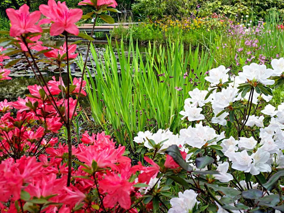 Prächtig Teichumfeld-Pflanzen | Teichpflanzen @AJ_27