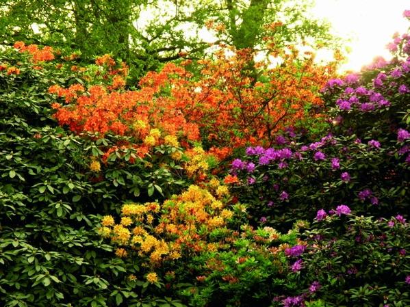 Teichumfeld pflanzen teichpflanzen for Gartenpflanzen versand