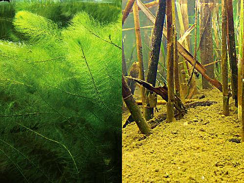 Am wichtigsten sind die Unterwasserpflanzen
