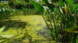 Algen: Entstehung und Vermeidung