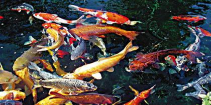 Fischteich Basis-Wissen