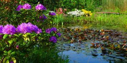 Pflanzen im Park