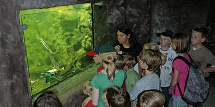 Führungen im Aquarium
