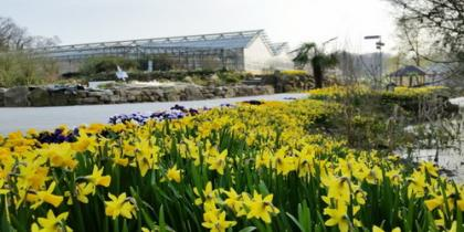 Frühlingsblüte bei NaturaGart