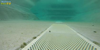 Der einfachste Weg zu klarem Wasser im Teich