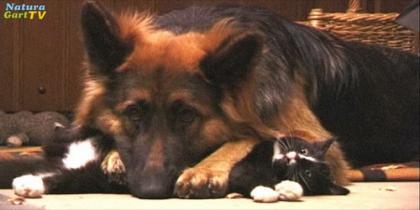 Tiere bei NaturaGart: Micki und Cleo