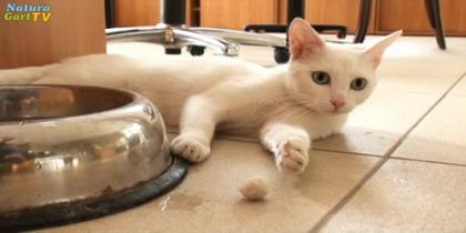 Marie, die wasserscheue Katze
