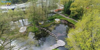 Wasserqualität in Teichen 2017