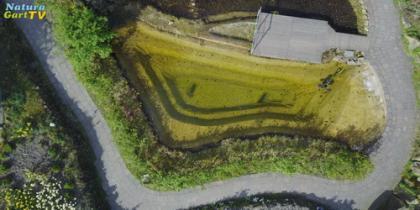 Teichwasser analysieren und steuern