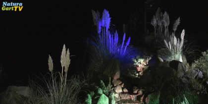 Naturnah wohnen – Licht im Garten