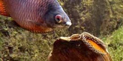 Kleinfisch-Teich