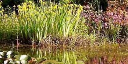 Molch-Teich