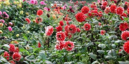 Sommerblumen im Park
