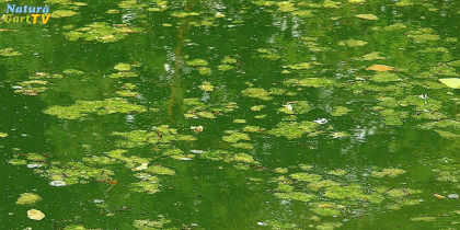 Rat bei Teichproblemen