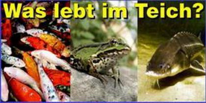 Tiere und Pflanzen am Teich