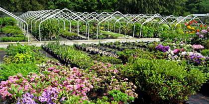 Hilfskraft für die Gärtnerei (m/w/d)