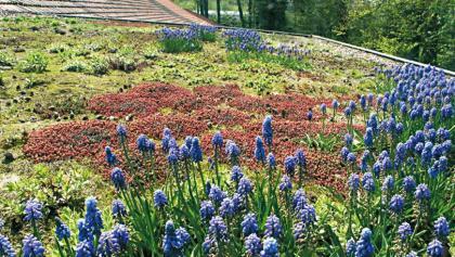 Dach-Bepflanzung