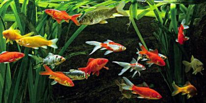 Was tun bei Fisch-Problemen?
